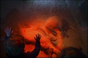 Punainen valokuvateos, jossa lapset kurottelevat makaavia eläimiä kohti.